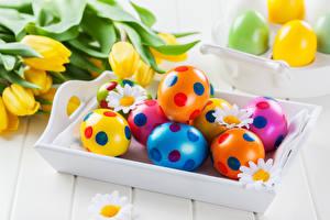 Картинки Праздники Пасха Тюльпаны Ромашки Доски Яйца