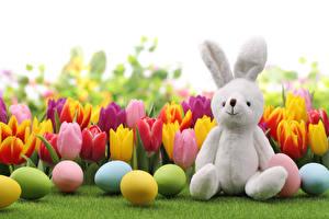 Обои Праздники Пасха Тюльпаны Кролики Яйца Трава Цветы