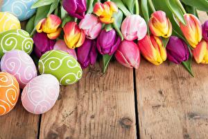 Фото Праздники Пасха Тюльпаны Доски Яйца Цветы