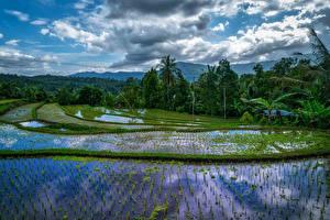 Картинки Индонезия Тропики Поля Вода Облака Деревья Bali Природа