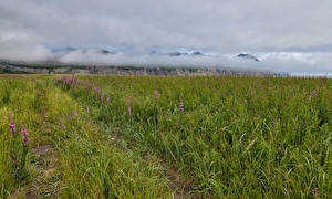 Картинки Камчатка Россия Поля Горы Туман Трава Природа