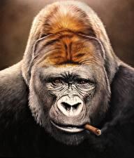 Фотографии Обезьяны Морда Взгляд Сигара Лицо Gorilla Животные