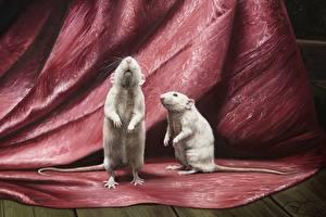 Обои Крысы Рисованные Двое Белый