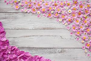 Картинки Розы Маргаритка Доски Лепестки Шаблон поздравительной открытки Dog rose Цветы