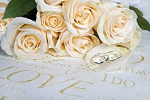 Картинка Розы Кольцо Двое Белый Цветы