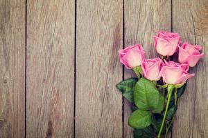 Картинка Розы Доски Розовый Цветы