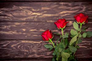 Фотография Розы Доски Красный Трое 3 Цветы