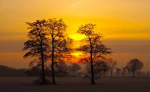 Картинки Рассветы и закаты Небо Деревья Природа