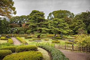 Обои Токио Япония Сады Газон Кустов Дерева Забором Imperial Palace East Gardens Природа