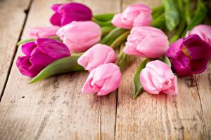 Обои Тюльпаны Крупным планом Доски Цветы