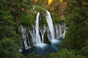 Картинка США Водопады Калифорния Скала MacArthur Burney Falls Природа