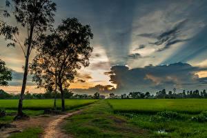 Фотография Вьетнам Поля Небо Деревья Облака Тропа Природа