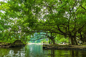 Картинка Вьетнам Озеро Дерева Лестница На ветке Природа
