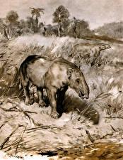 Фото Древние животные Zdenek Burian Черно белое Moeritherium