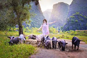 Фото Азиаты Домашняя свинья Гуляет Девушки Животные