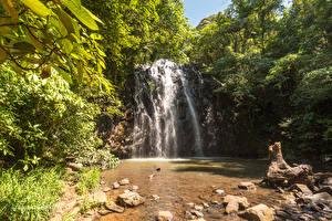 Фото Австралия Водопады Леса Камень Скала Ellinjaa Falls Queensland Природа