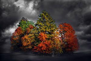 Фотографии Осень Деревья