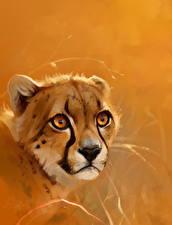 Фотографии Большие кошки Гепарды Крупным планом Голова