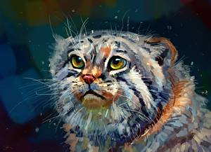 Фото Большие кошки Рисованные Манул Вблизи Голова Животные