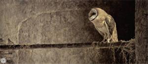 Картинка Птицы Рисованные Совообразные Ветки Животные