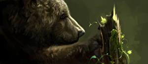 Фотографии Бурые Медведи Рисованные Крупным планом Голова Животные