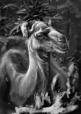 Обои Верблюды Рисованные Черно белое Голова