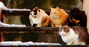 Фото Кошки Лестница 4 кота на ступеньках Животные