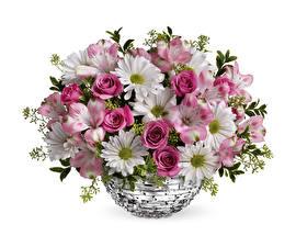 Фотографии Хризантемы Розы Альстрёмерия Белый фон Ваза Цветы