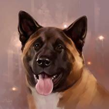 Фотографии Собаки Рисованные Крупным планом Американская акита Язык (анатомия) Голова Морда Животные