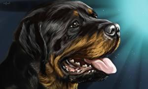 Фотография Собаки Рисованные Вблизи Голова Язык (анатомия) Ротвейлер Животные