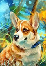 Картинка Собаки Рисованные Вельш-корги Животные