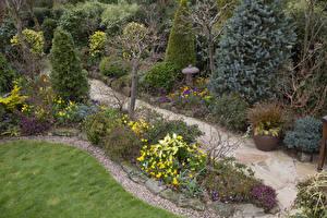 Фото Англия Сады Кусты Ель Walsall Garden Природа