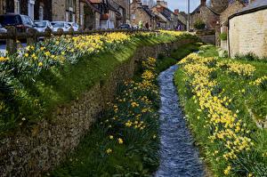 Картинка Англия Дома Нарциссы Улица Водный канал Helmsley Города