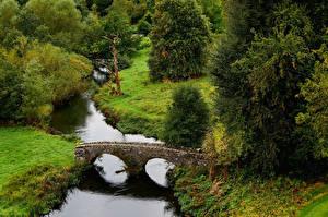 Фотография Англия Парк Река Мосты Ель Derbyshire Природа