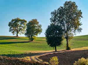 Фотографии Поля Деревья