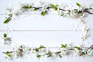 Фотографии Цветущие деревья Доски Шаблон поздравительной открытки Цветы