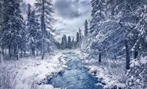 Картинка Леса Зима Канада Ручей Деревья Quebec