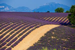 Фотография Франция Поля Лаванда Provence