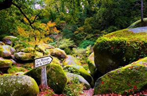 Обои Франция Леса Камень Кусты Мох Huelgoat Brittany