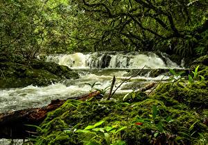 Картинка Франция Леса Водопады Мох Reunion Природа