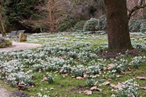 Фотография Германия Весна Парки Подснежники Grugapark Essen Природа