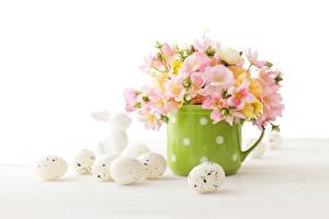 Фото Праздники Пасха Букеты Белый фон Яйца Кружка Цветы