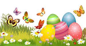Фотографии Праздники Пасха Бабочки Ромашки Векторная графика Яйца Трава Белый фон Животные