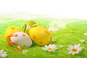 Обои Праздники Пасха Ромашки Яйца Трава