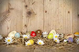 Фото Праздники Пасха Ромашки Доски Яйца Солома