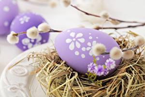 Фотографии Праздники Пасха Вблизи Яйца Гнездо Ветвь