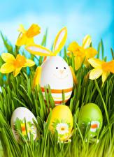 Картинки Праздники Пасха Нарциссы Яйца Трава