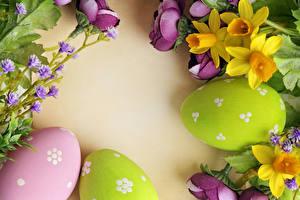 Фото Праздники Пасха Нарциссы Шаблон поздравительной открытки Яйца Цветы