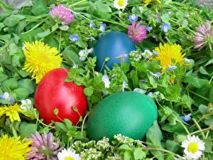 Обои Праздники Пасха Одуванчики Яйца