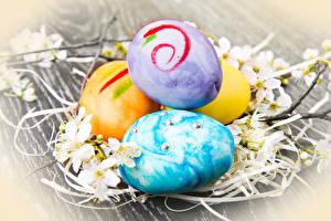 Картинка Праздники Пасха Яйца Ветки